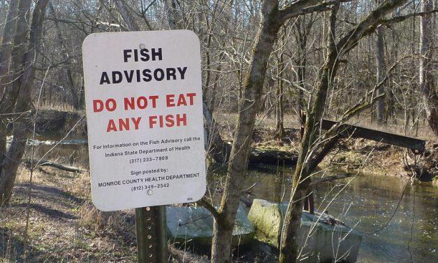 PFAS: All fish in Michigan's Huron River unsafe to eat